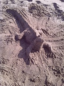 sand iguana