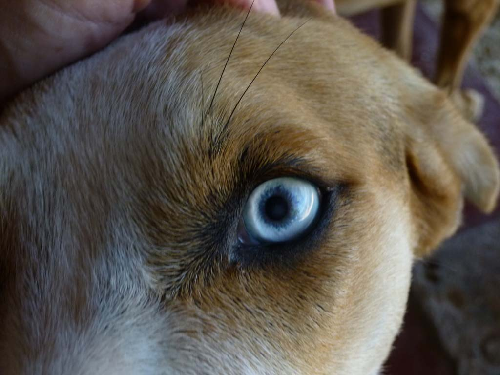 Nice beach dog in Puerto Viejo with beautiful eyes