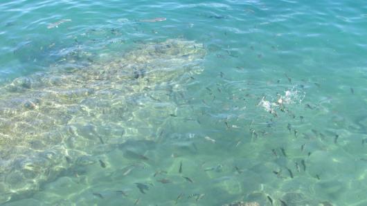 Fish on Geoffrey Bay, Magnetic Island