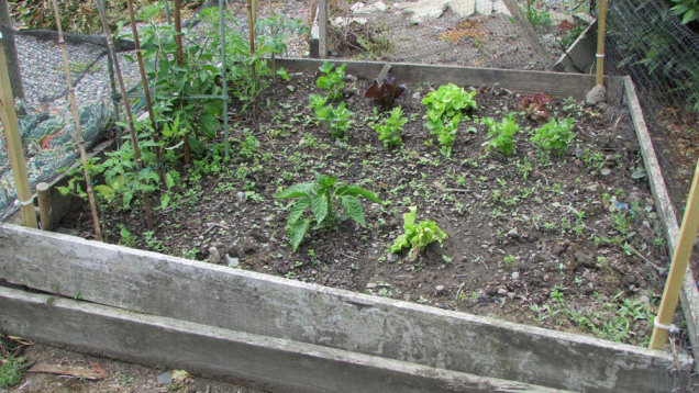 The garden before