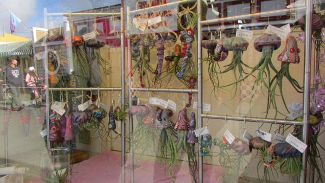 Squid air plants you soak in water once a week
