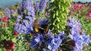 napier purple flowers bee