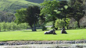 craggy rock vineyard cows