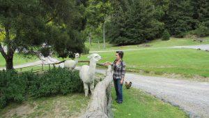 thermal walkway taupo alpaca