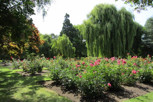 pollard park roses