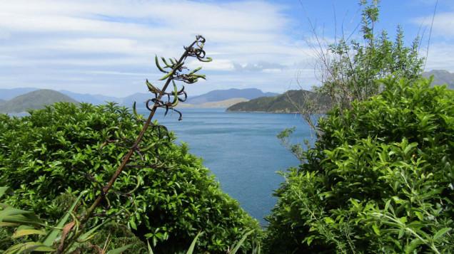Maud island view