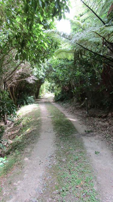 maud island track