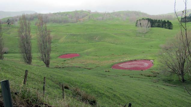 pink algae pond new zealand