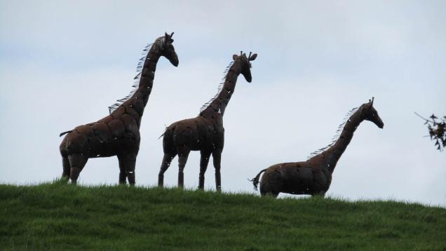 metal giraffes new zealand