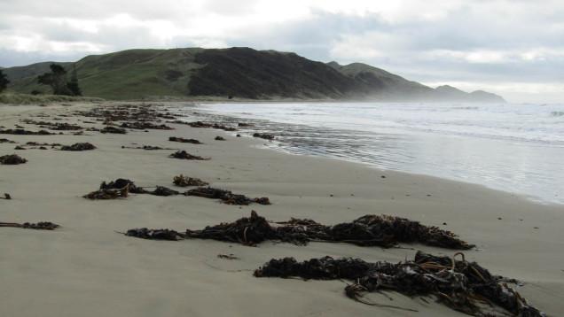 pourerere beach