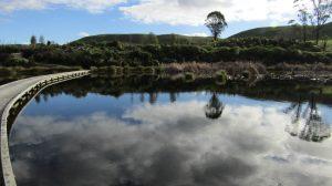 pekapeka wetland