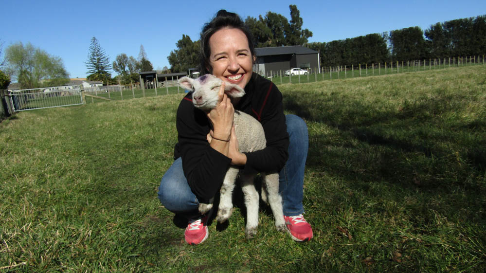 meanee new zealand lambs