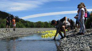 Waipawa duck race