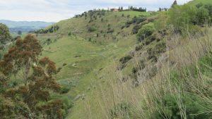 Pukeora estate view