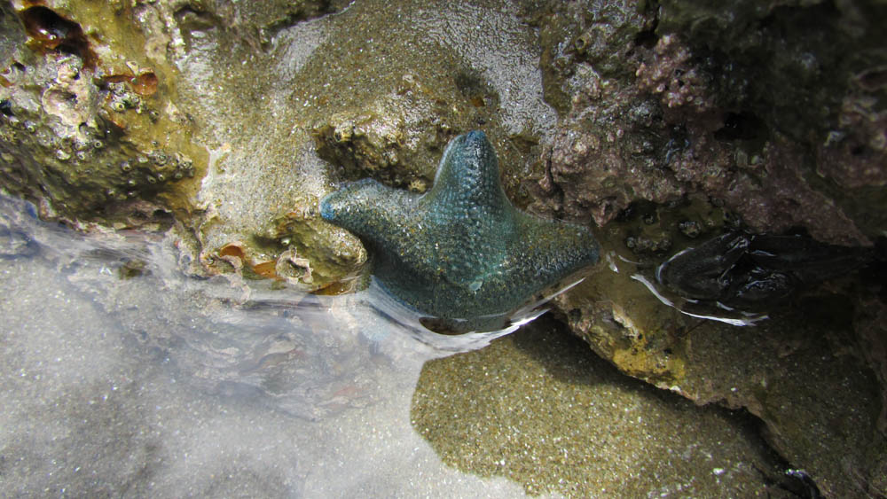 Te Angiangi Marine Reserve Part 2