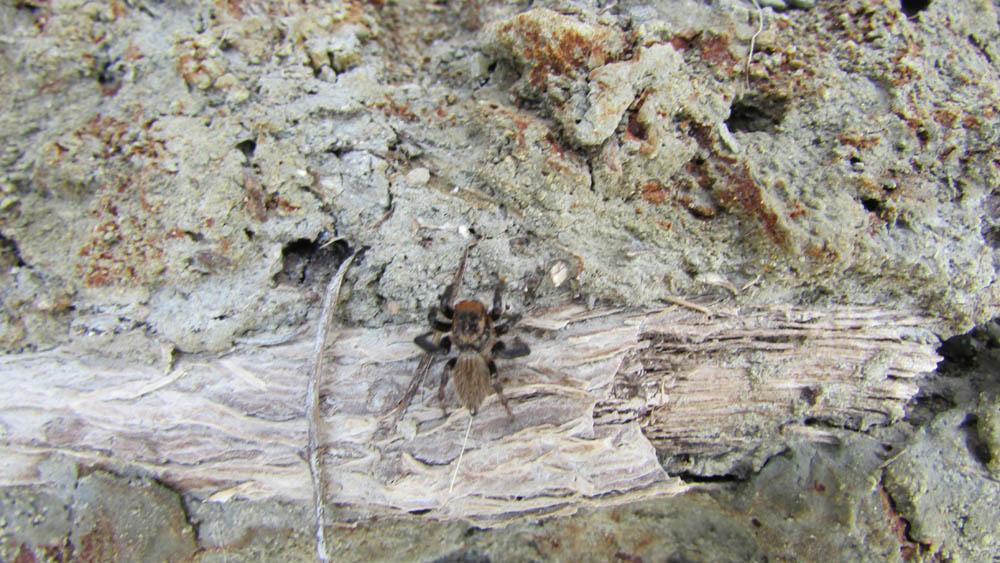 nz spider with silk