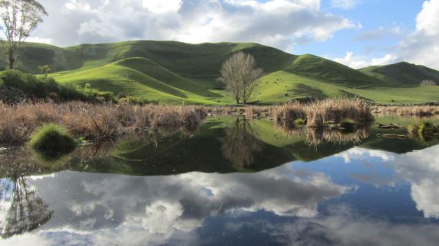 Peka Peka wetlands