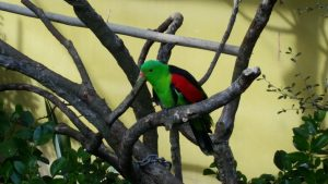 Brooklands zoo parrot