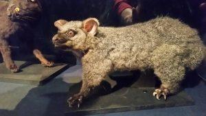 New Plymouth museum possum