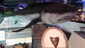 New Plymouth museum megaladon shark