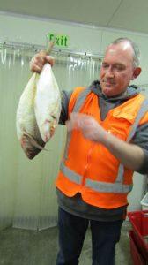 trevally fish hawke's bay seafood