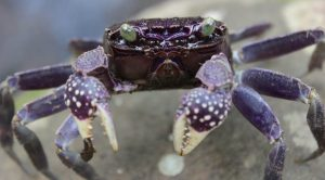 cropped-tavoro-falls-purple-crab-taveuni-fiji