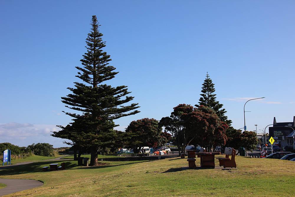 Paraparaumu beach front