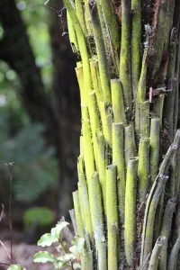 tree fern trunk with moss nga manu reserve