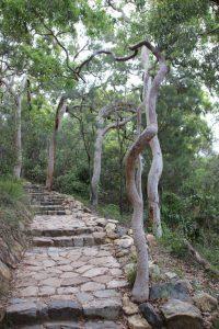 Mt Coolum park steps