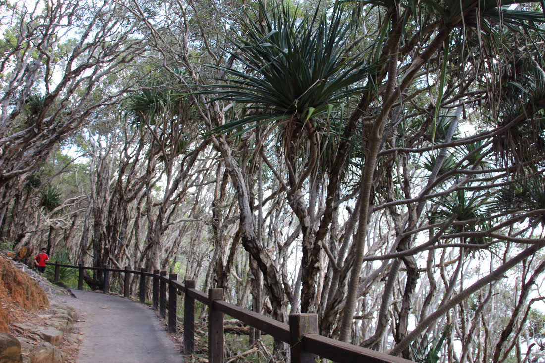 Noosa National Park boarwalk