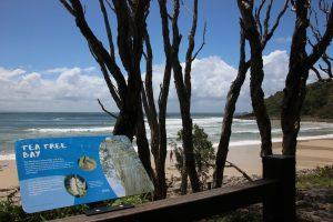Noosa National Park tea tree bay beach