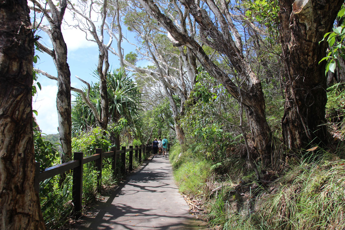 Noosa coastal trail