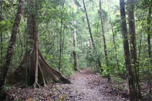 Noosa national park trail