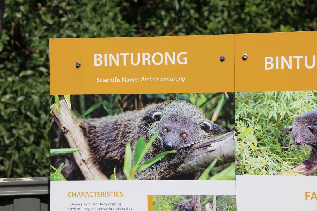 Wildlife HQ Binturong sign