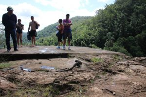 lace monitor tree goana Kondalilla falls by people