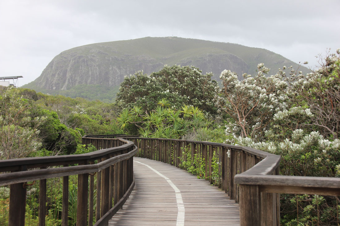 view of mt coolum from Boardwalk