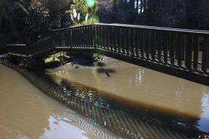 Dannevirke Domain pond
