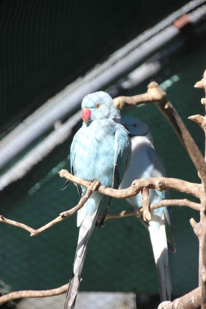 Dannevirke Domain aviary
